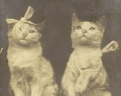 Antique 1906 Real Photo Postcard Rotograph Co – Silly Image of Two Bandaged Cats After the Battle