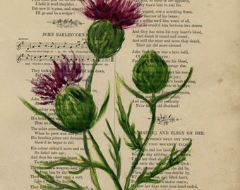 Thistle, Scotland,  Original watercolor,  on antique book page - The British Student Song Book 7.3 x 9.5 inches