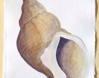 Original watercolour illustration painting of a whelk sea shell on A4 paper 8x12 inch approx ocean treasures series