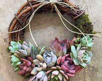 """10"""" Living Succulent """"Ana"""" Wreath with a rainbow of colors from pink, blue, lavender, green, blue and yellow"""