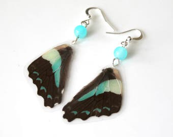 Black and Pale Blue Butterfly Earrings, Real Butterfly Wings, Natural History Earrings