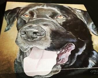 Pet Portrait Commissions 12x12 Acrylic