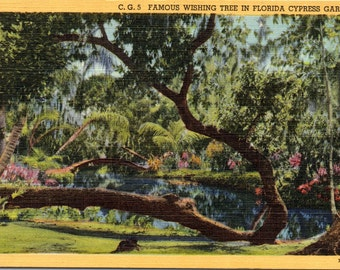 Cypress Gardens, Florida, Wishing Tree - Linen Postcard - Postcard - Unused (L)