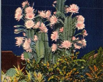 Florida, Cereus, Night Blooming - Linen Postcard - Postcard - Unused (G1)