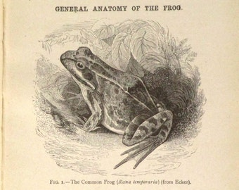 Antique school biology book,  The Frog anatomy Book
