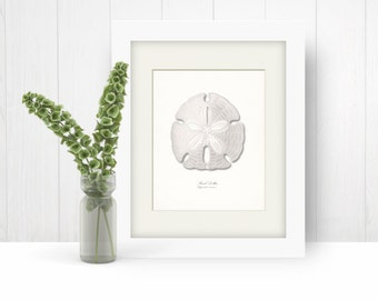 Coastal Decor Sea Shell - Sand Dollar Nautical Giclee Art Print with size options