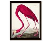 Vintage Audubon Pink Flamingo Bird Print, Giclee Art Print, Poster, Beach House Decor, Wall Hanging, Coastal Art, Audubon Bird Prints