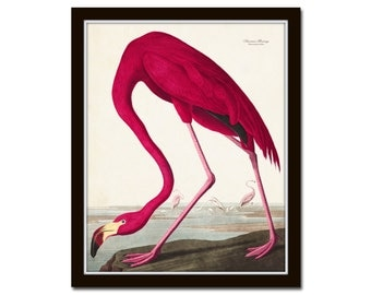 Vintage Audubon Pink Flamingo Bird Print, Giclee Art Print, Poster, Beach House Decor, Wall Hanging, Coastal Art, Audubon Bird Prints