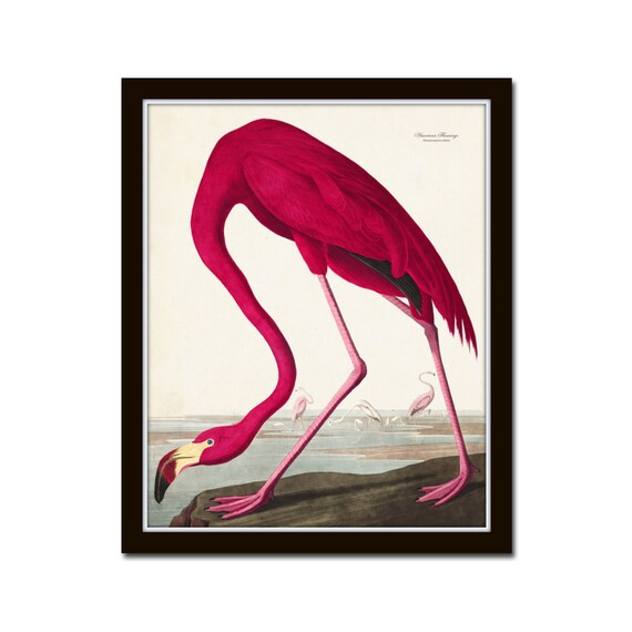 Vintage Audubon Pink Flamingo Bird Print Giclee Art Print