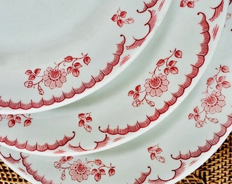 Shenango Restaurant China Floral  Chardon Rose Dinner Plate,  Rim Rol Wel Roc
