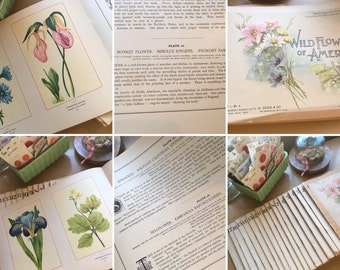 Vintage Botanical Fine Art Weekly book full collection