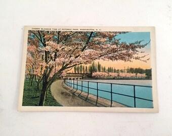 Cherry Blossom Time at Potomac Park Linen Postcard