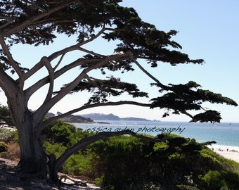 Carmel-By-The-Sea III