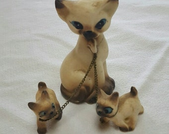 Mama Siamese with her Twins on Leash