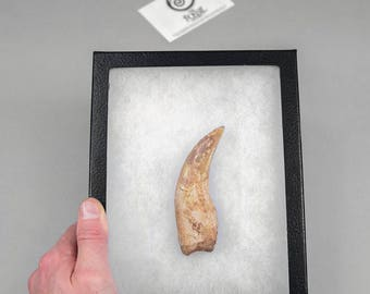 Spinosaur Dinosaur Hand Claw