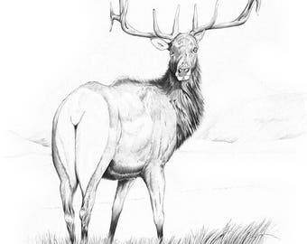 Indecision ~ Wildlife Print