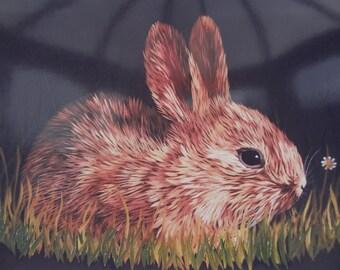 Baby Bunny - Greetings Card Fine Art Print
