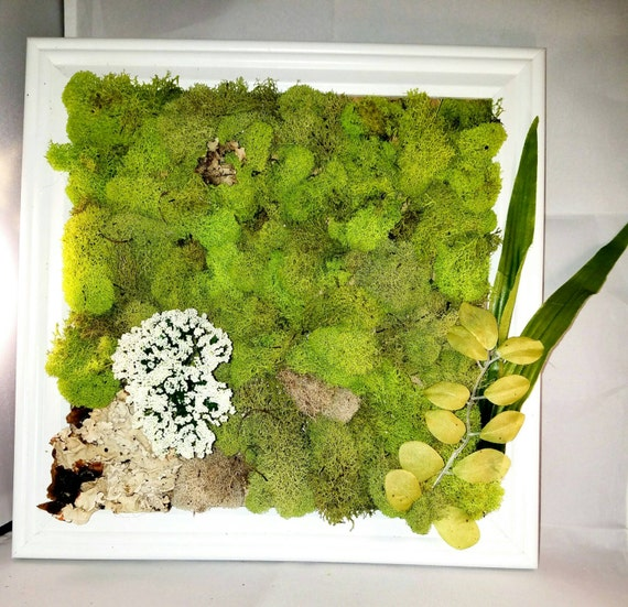 Moss wall hanging art faux plants, white frame