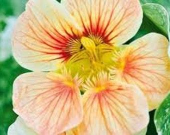 ANA) PEACHES & CREAM Nasturtium~Seeds!!~~~~A Delicious Beauty!