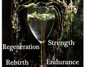 Willow Tree Spirit Essence