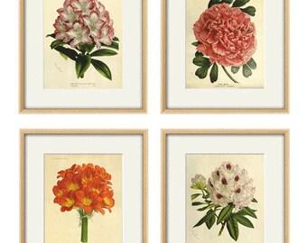 Antique flower art Print set antique prints botanical prints flower wall art Victorian art French prints old prints garden wall art