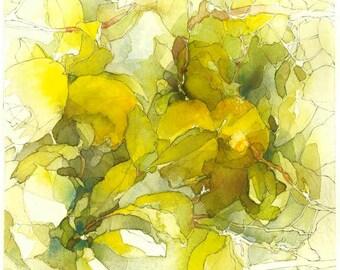 Lemon Tree Study #2: Citrus limon