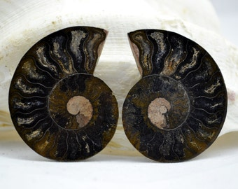 "e3590x RARE 1 in 1000 BLACK Ammonite PAIR Deep Crystals Large 2.17"" 110myo 55mm"