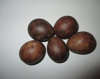 A hollow replica clutch of five merlin eggs.