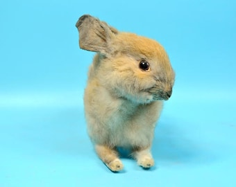 Taxidermy  bunny  Rabbit, gift, birthday gift,home decoration.free shipping to worldwide