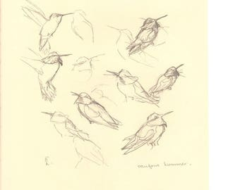 50% Off Estate Sale Vintage Rufous Hummingbird, Common Flicker, 1970s Frameable Sketch, drawing, West Coast P 150, Wall Art Print of Bird by