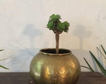 Cache pot plant copper gold chiseled new art 1920