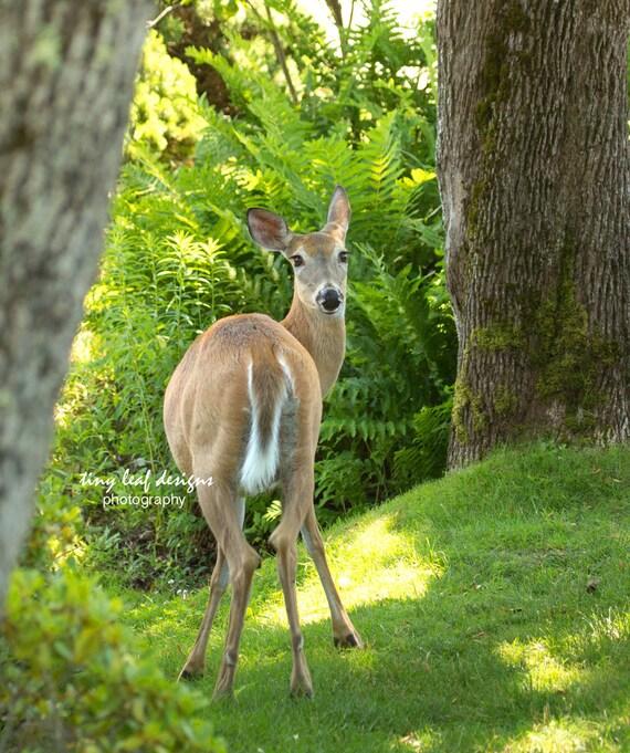 Deer in The Woods Original Photography
