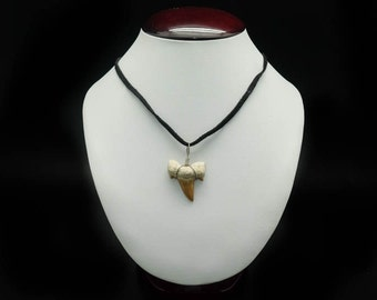Shark Tooth Necklace: Black Suede Cord (282-8)