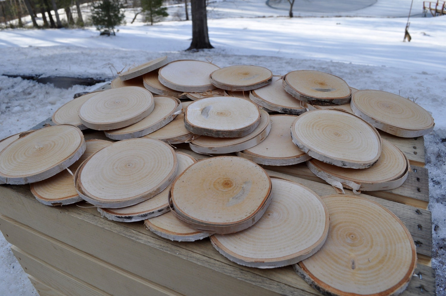 White birch decor per bundle natural discs