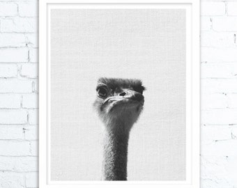 Ostrich Print, Safari Baby Shower Animal, Nursery Decor, Boys Room Wall Art, Printable Large Poster, Digital Download, Kids Room Decor