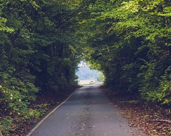 Tree Nature Photography, Green Botanical, Summer Green, Leaves, Road, Fine Art Photography, Print Home Decor Trees Landscape