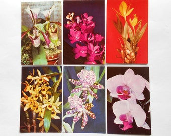 Orchids (Photo by A. Veseluhina) - Vintage Russian USSR Postcards - set of 15, Moscow 1981