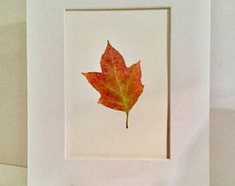 Real Pressed Flower Fern Leaf Botanical Art Herbarium of Oak Leaf Hydrangea Leaf 5x7 OR 8x10