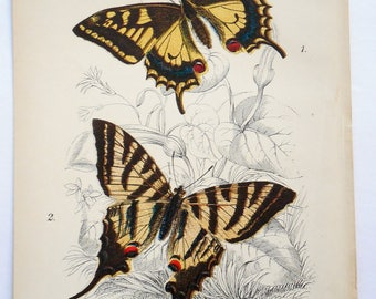 Butterfly Antique Lithograph. Colorful, 1896 Original Natural History. From Kirby's Lepidoptera. Achivus Machaon and Iphiclides Podalirius