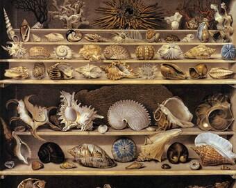 Seashell Art, Wall Art, Wall Decor, Seashell Decor, Seashell Wall Art, Seashell Wall Decor, Wall Art Decor, Art Decor, Seashell Prints, Art