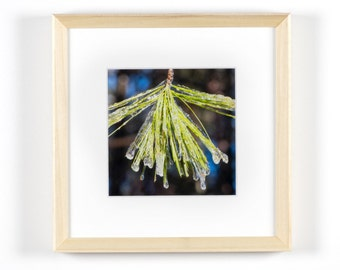 "Ice on Pine 5""x5"" Framed Art Photograph (8""x8"" with Frame)"