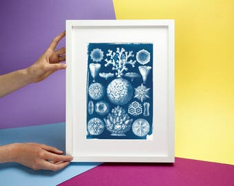 Geometric Coral Drawing by Ernst Haeckel, Cyanotype Print on Watercolor Paper, A4 size