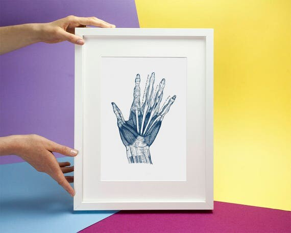 Hand Anatomy Vintage Illustration, Cyanotype Print on Watercolor Paper, A4 size (Limited Edition)