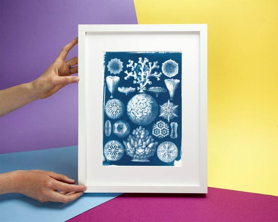 Geometric Coral Drawing by Ernst Haeckel, Cyanotype Print on Watercolor Paper, A4 size (Limtied Edition)