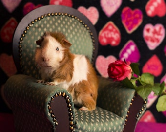 Valentine's Day Guinea Pig Greeting Card