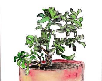 """Aquarelle originale succulente, plante grasse """"jade plant"""" - Pour décorer votre intérieur avec une aquarelle végétale."""