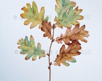 Oak leaf painting, Autumn leaves, Botanical art, Botanical illustration, Botanical painting, Oak leaf picture, Autumn colour, Autumn picture