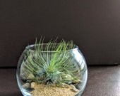 Glass Globe Terrarium Kit with Air Plant, Sand and River Rock – Great Gift!