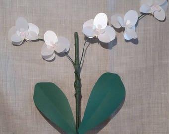Orchid phalaenopsis plant decorative paper