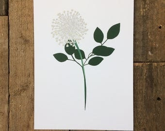 Single Stem Botanical Floral Flower A4 Print